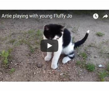 Artie playing with young Fluffy Jo (video)